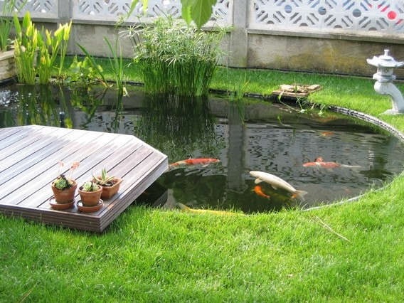 bassin de jardin avec koi bassin de jardin. Black Bedroom Furniture Sets. Home Design Ideas