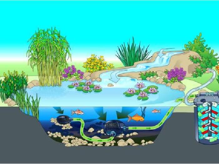 Bassin De Jardin Filtration Biologique